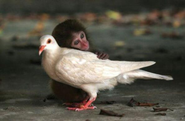 9 трогателни примера на дружба между животни