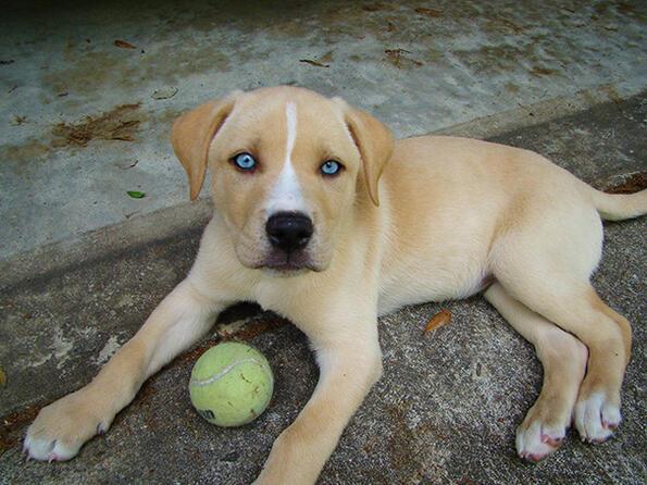 Уникални кучета от смесени породи