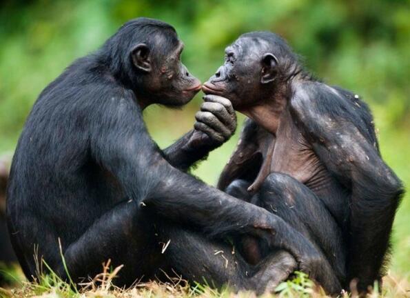 Необичайни сексуални ритуали при животните