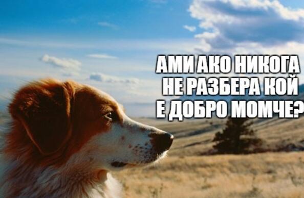 Кучешки размисли и страсти