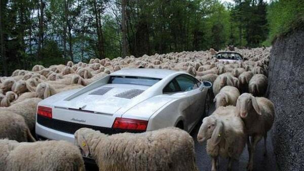 Камили, овце, змии и други уважителни причини да закъснееш за работа