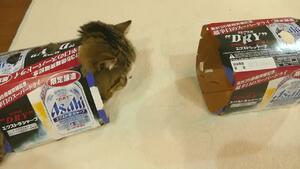 Защо котките се завират в кутии?