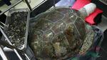 Скръбна вест: Умря прослувата костенурка, която изяде 915 монети
