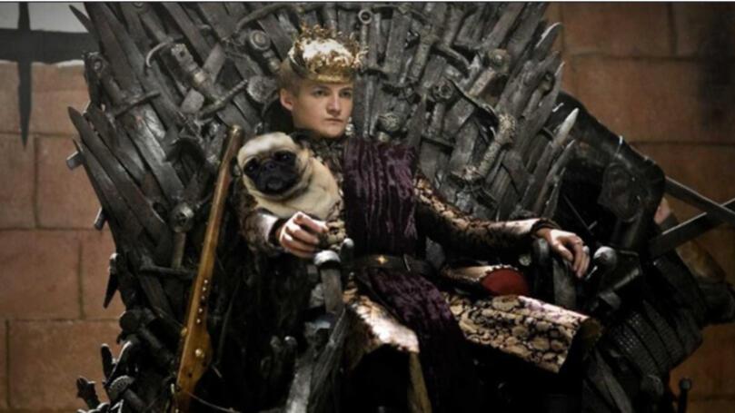 Умопомрачителният крал Джофри и неговия мопс!
