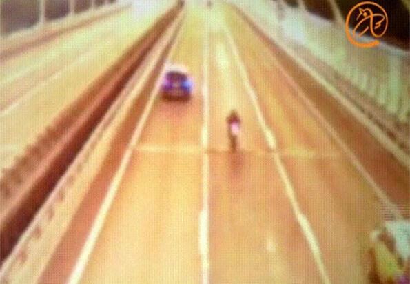Карък на годината: да разпилееш 12 милиона по магистралата!