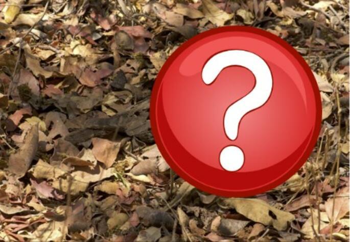 Оптическа илюзия на седмицата: Къде е птицата на снимката?