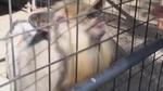 Животни изпълняват кавър на Du hast на Rammstein