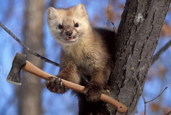Въоръжени до зъби (и клюнове)животни! Брутални колажи