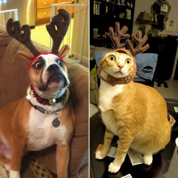<p>По Коледа всички сме твърде превъзбудении ненадейно въвличаме и домашните си любимци в празничната лудница. Изглежда, че на тях не им пука особено!</p>