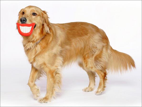 <p>Тези животни нямат представа колко са смешни със своите играчки!</p>