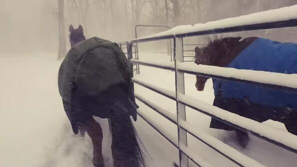 Целият Интернет се смее на реакцията на тези коне, които излизат на снега