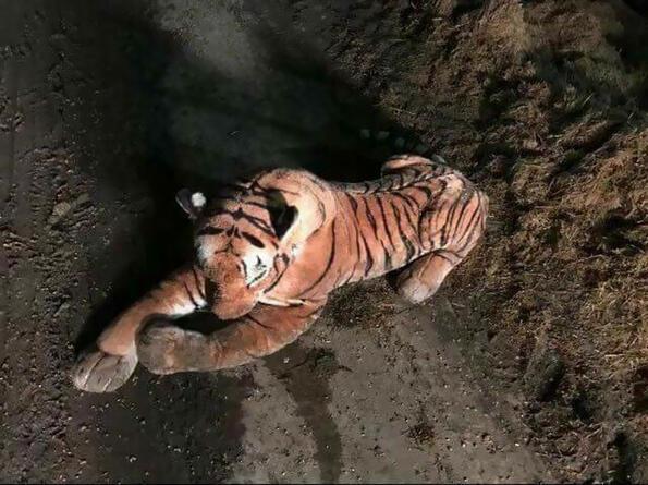 45-минутна полицейска операция, заради плюшен тигър