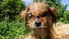 Невероятната история за трансформацията на това страховито куче в истински симпатяга