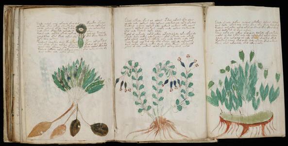 Успя ли изкуственият интелект да разгадае ръкописа на Войнич?
