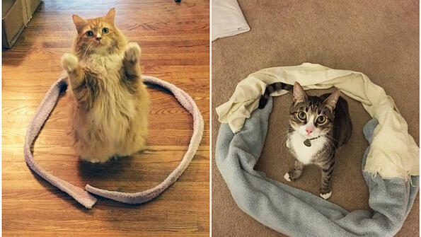 Котешки експеримен завладя мрежата! Пробвай на твоята котка!