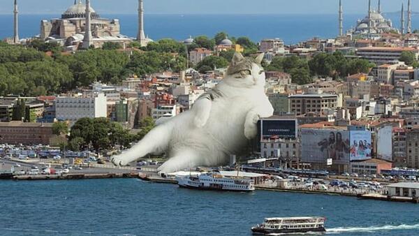 Котката и градът! Новият брутален и мил жанр в изобразителното изкуство!