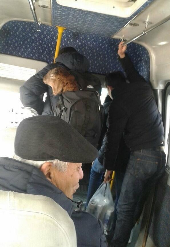 Ако ти е скучно в градския транспорт!