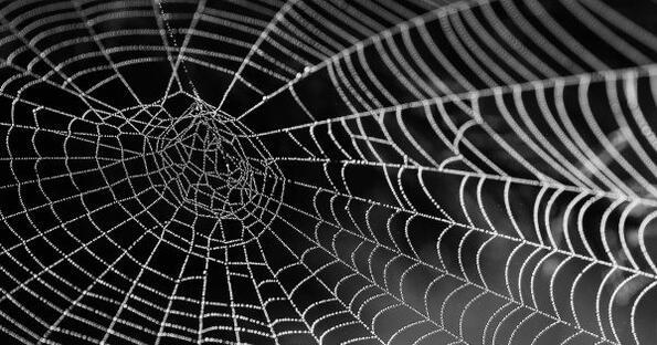 Този паяк прави паяжини, по-здрави и от Кевлар