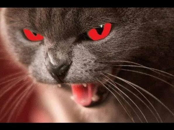 13 котки, които искат да те унищожат