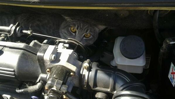 Какво намират хората под капаците на колите си?
