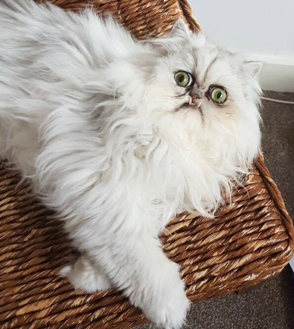 6 драматични снимки на най-страната котка, която сме виждали