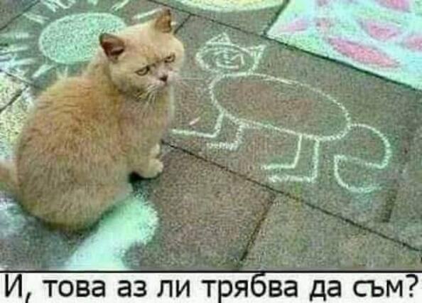 Най-яките мемета с котенца от социалните мрежи за тази седмица
