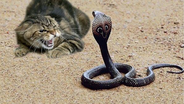 Котка срещу всички твари на Земята!