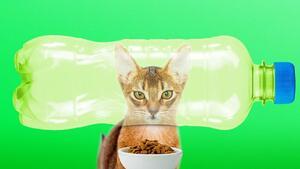 12 самоделни неща за животни, които са невероятно полезни!